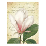 Vintage de la flor de la magnolia botánico postales