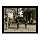 Vintage de la mula y del granjero de Milwaukee Postales