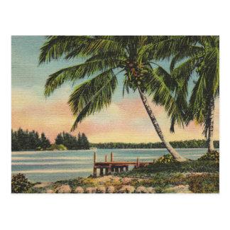 vintage de las palmeras tarjeta postal