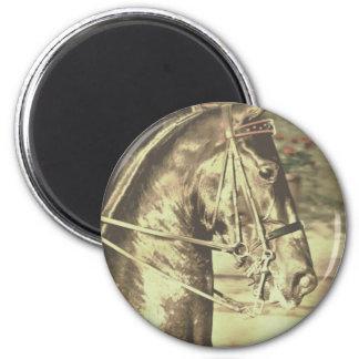 Vintage de Saddlebred del americano falso Imán Redondo 5 Cm