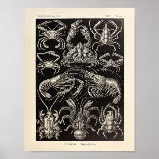 Vintage Decapoda Ernst Haeckel Art Print