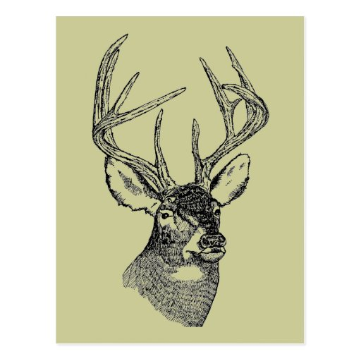 Vintage deer art graphic postcard