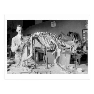 Vintage del dinosaurio del bebé del científico de  postales
