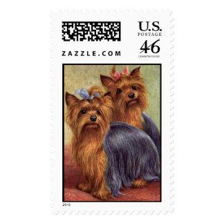 Vintage del franqueo de Yorkshire Terrier