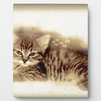 vintage del gato del bebé placas para mostrar