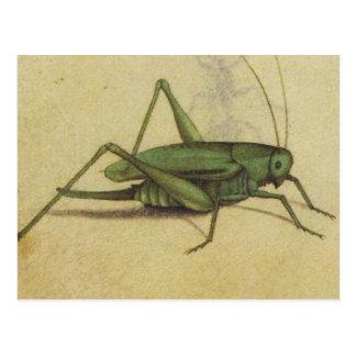 Vintage del grillo del insecto postal