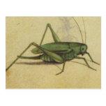Vintage del grillo del insecto tarjetas postales