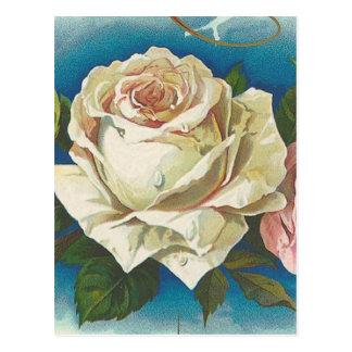 Vintage del rosa blanco postales