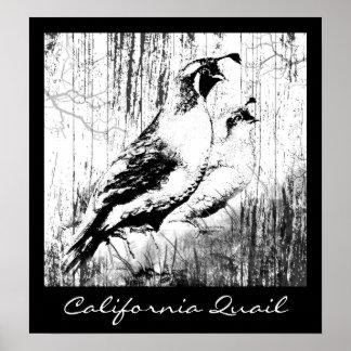 Vintage Design California Quail birds Poster