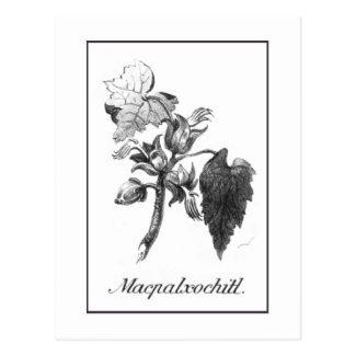 Vintage Devil's hand tree etching card