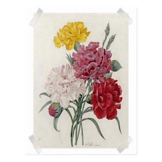 Vintage Dianthus - Photo Album Postcard