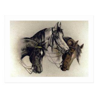 Vintage dibujado mano de tres cabezas de caballo postal