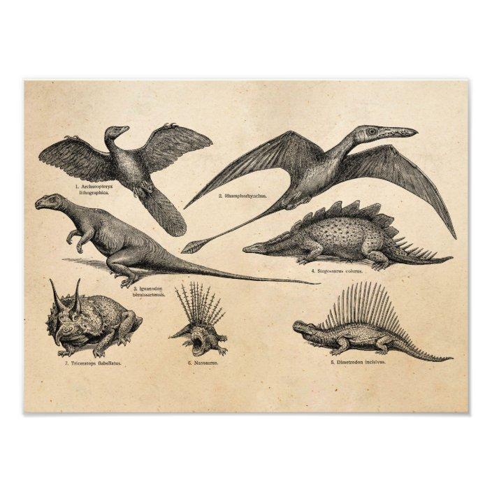 Vintage Dinosaur Illustration Retro Dinosaurs Photo Print Zazzle.com