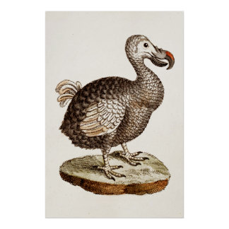 Vintage Dodo Bird Illustration 1700s Dodo Birds Poster