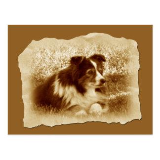 Vintage Dog in Sepia Tones Postcard