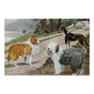 Vintage Dog Lovers Art Collie Trio Poster