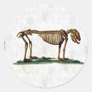 Vintage Dog Skeleton Classic Round Sticker