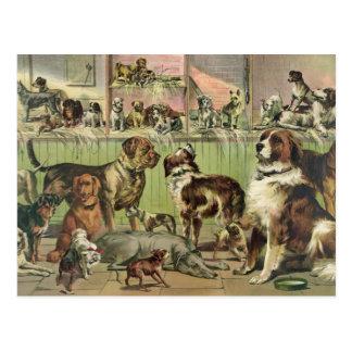 Vintage Dogs Postcard