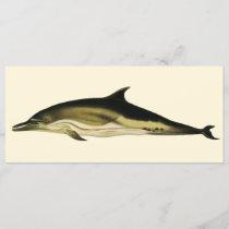 Vintage Dolphin Delphinus Delphis, Marine Mammals