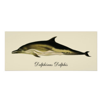 Vintage Dolphin Delphinus Delphis, Marine Mammals Poster