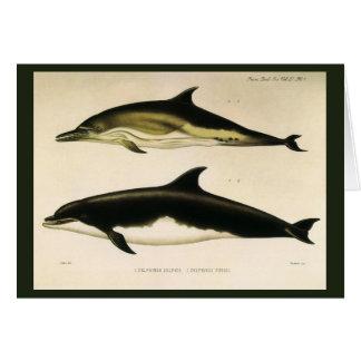 Vintage Dolphins, Marine Animals and Mammals Card