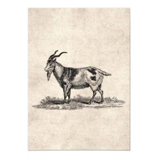 Vintage Domestic Goat Illustration -1800's Goats Card