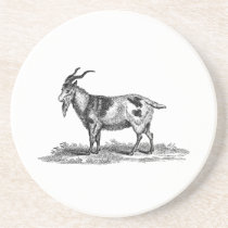 Vintage Domestic Goat Illustration - 1800's Goats Drink Coaster