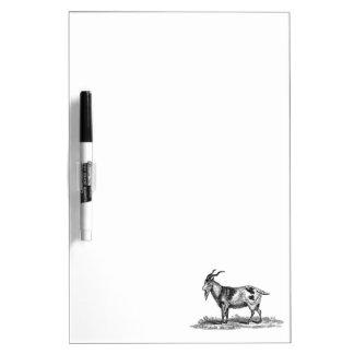 Vintage Domestic Goat Illustration -1800's Goats Dry-Erase Board