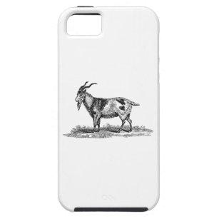Vintage Domestic Goat Illustration -1800's Goats iPhone SE/5/5s Case