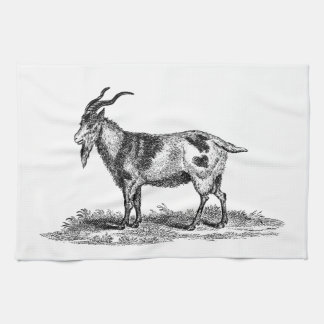 Vintage Domestic Goat Illustration - 1800's Goats Kitchen Towel