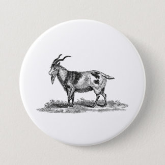 Vintage Domestic Goat Illustration - 1800's Goats Pinback Button