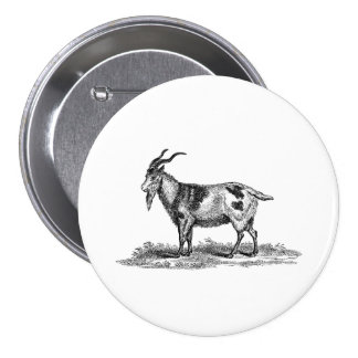 Vintage Domestic Goat Illustration -1800's Goats Pinback Button