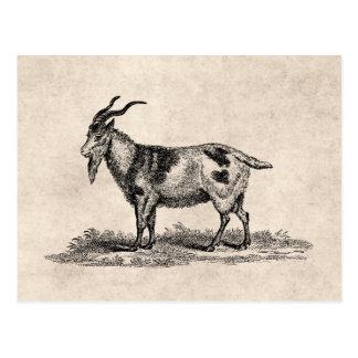 Vintage Domestic Goat Illustration -1800's Goats Postcard