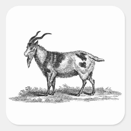 Vintage Domestic Goat Illustration -1800's Goats Stickers