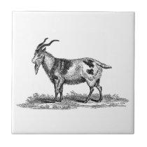 Vintage Domestic Goat Illustration -1800's Goats Tile