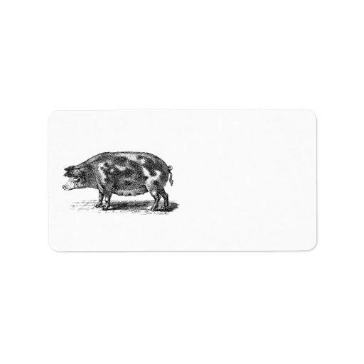 Vintage Domestic Hog Illustration - 1800's Pig Address Label