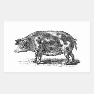 Vintage Domestic Hog Illustration - 1800's Pig Rectangular Sticker