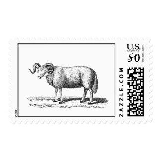 Vintage Domestic Sheep Illustration - 1800's Ram Postage