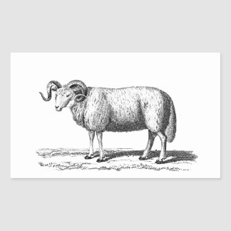 Vintage Domestic Sheep Illustration -1800's Ram Rectangular Sticker