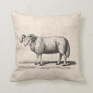Vintage Domestic Sheep Illustration -1800's Ram Throw Pillow