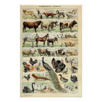Vintage Domesticated Animals by Adolphe Millot Poster