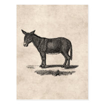 Vintage Donkey Illustration - 1800's Donkeys Postcard