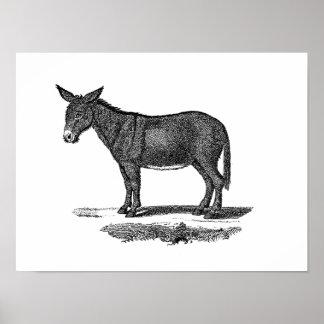Vintage Donkey Illustration -1800's Donkeys Poster
