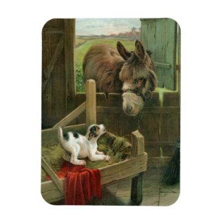 Vintage Donkey & Puppy Dog in Manger Old Barnyard Rectangular Photo Magnet