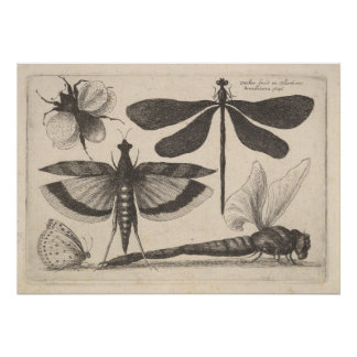 Vintage Dragonfly Bee Insect Entomology Print (61)