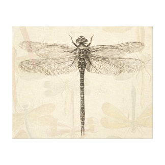 Vintage dragonfly drawing stretched canvas prints