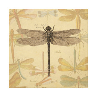 Vintage dragonfly drawing gallery wrapped canvas