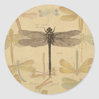 Vintage dragonfly drawing classic round sticker