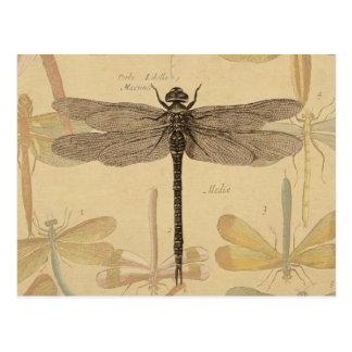 Vintage dragonfly drawing postcard