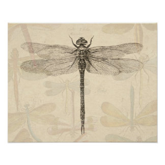 Vintage dragonfly drawing print
